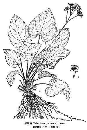 清新古装手绘红豆